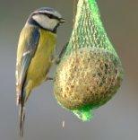 Cibo per Uccelli