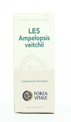 Ampelopsis Veitchii Les