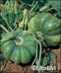 Semi di Zucca Moscata di Provenza - 25 Gr.