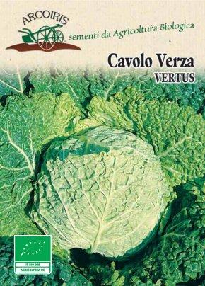 Semi di Cavolo Verza Vertus - 10 Gr