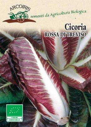 Semi di Cicoria Rossa di Treviso Precoce - 25 Gr.