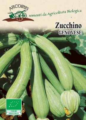 Semi di Zucchino Genovese -  7 Gr.