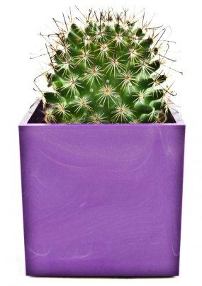 Cactus con Vasetto Magnetico Violetta