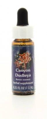 Canyon Dudleya - Essenze Californiane