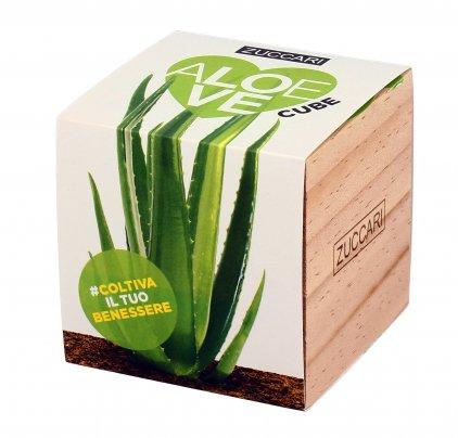"""Pianta d'Aloe da coltivare """"Aloelove Cube"""""""