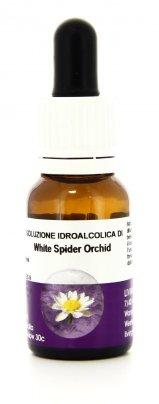 White Spider Orchid - Essenze Australiane Living