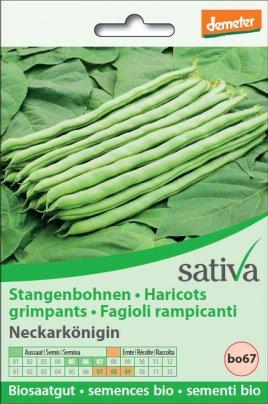 """Fagioli Rampicanti """"Neckarkonigin"""" - bo67"""