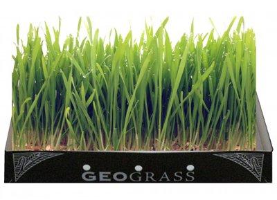 Geograss Kit per Erba di Grano - Orzo