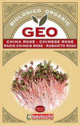 Germogli di China Rose