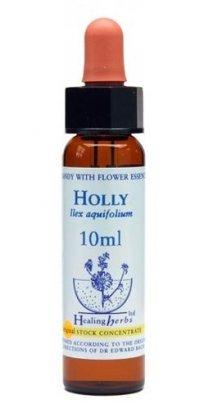 Holly - Ilex Acquifolium