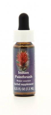 Indian Paintbrush Essenze Californiane
