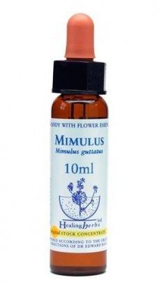 Mimulus - Mimulus Guttatus
