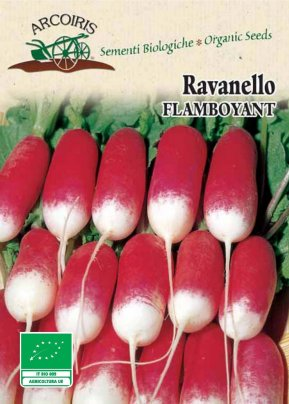 Semi di Ravanello Flamboyant - 4 g.