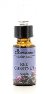 Red Chestnut - Castagno Rosso