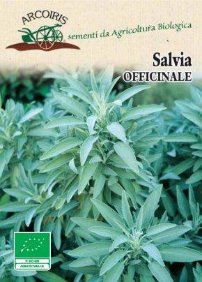 Semi di Salvia Officinale - 3 Gr