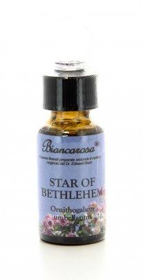 Star of Bethlehem - Stella di Betlemme