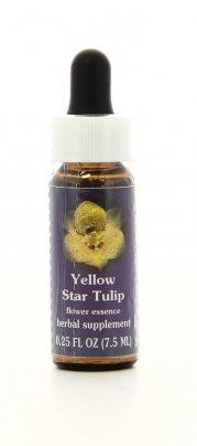 Yellow Star Tulip Essenze Californiane