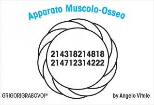 Tessera Radionica - Apparato Muscolo-Osseo