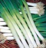 Semi di Cipollotti - Bunching Onion Ishikura Long White - 10 Gr