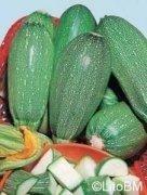 Semi di Zucchino Bolognese -  25 Gr.