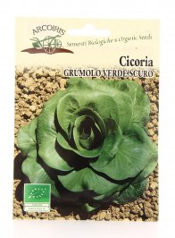 BU011 Semi di Cicoria Grumolo Verde Scuro - 5 Gr