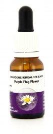 Purple Flag Flower - Essenze Australiane Living