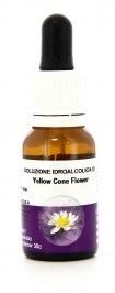 Yellow Cone Flower - Essenze Australiane Living