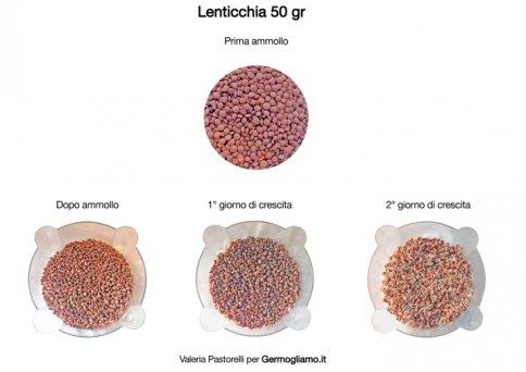 Lenticchie Lens culinaris