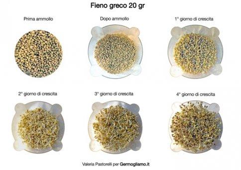 Semi per Germogli - Fieno Greco Trigonella foenum graecum