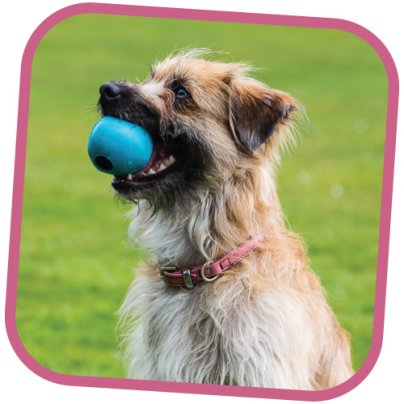 Palla Becoball Large Per Cani