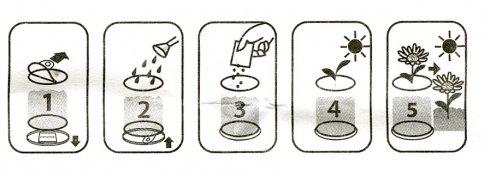 Linguaggio Fiori Istruzioni