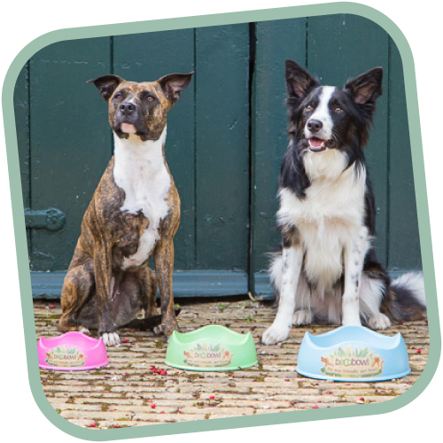 Ciotola Per Cani Becobowl Media