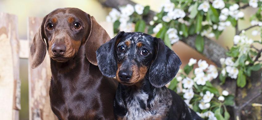 Balsamo Naturale per Cani - Pelo Lungo, Corto e Ruvido