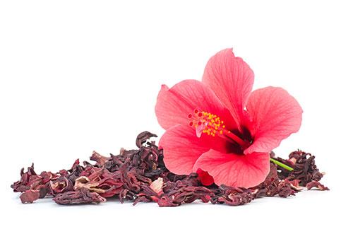 Fiore ed Estratti di Ibisco