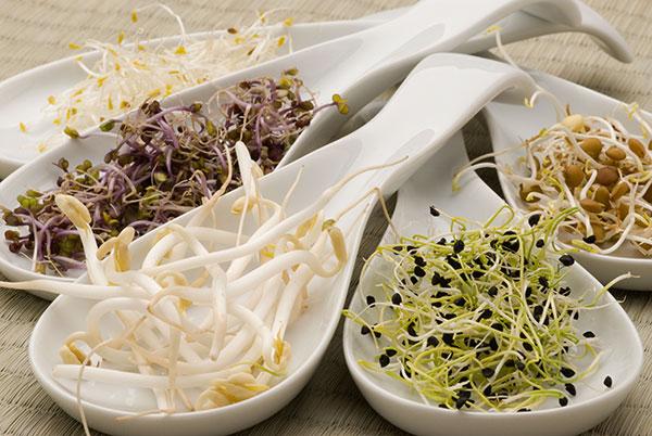 Semi per Germogli - Mix Antiossidante: Semi di erba medica, Cavolo rosso e Broccolo