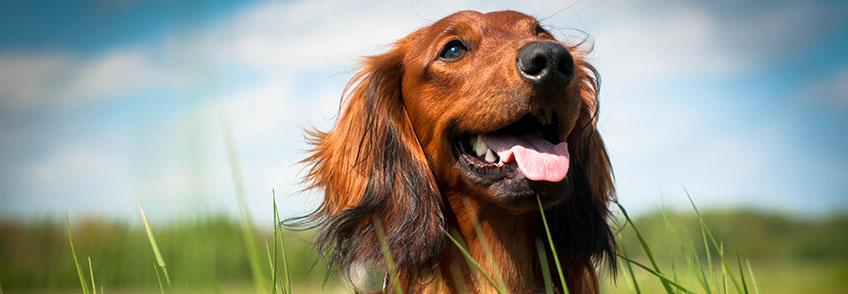Sciroppo per Cani - Aloeplus