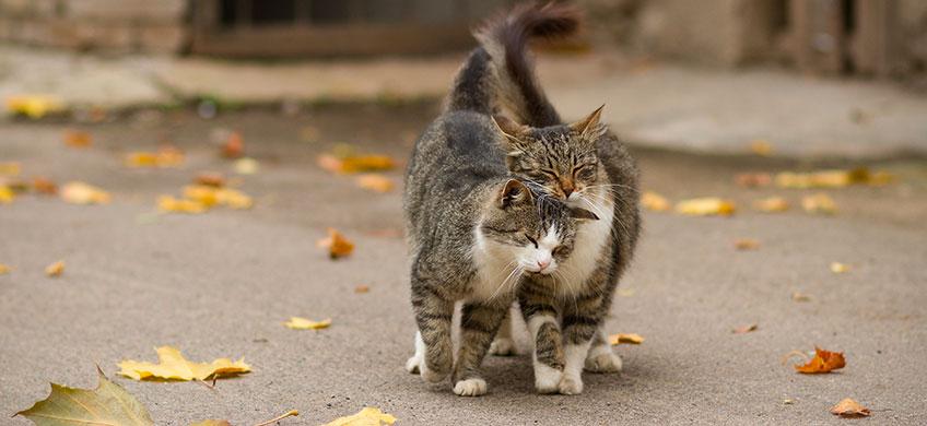 Instinct Balance Animal