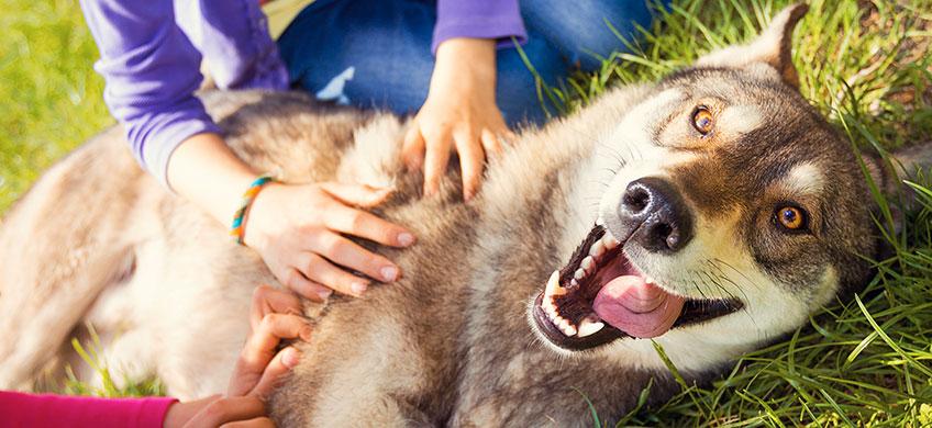 Sale Basico in Polvere - Alimento Complementare per Cani