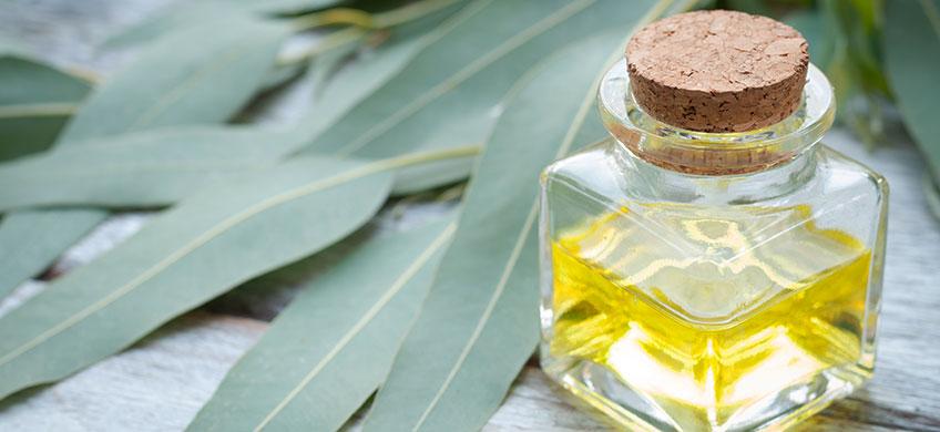 Olio Essenziale Eucalipto Bio