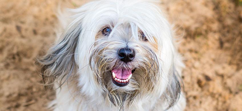 Shampoo Delicato per Cani - Pelo Lungo