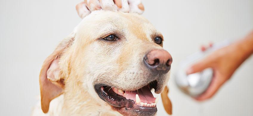 Shampoo Concentrato alla Camomilla per Animali