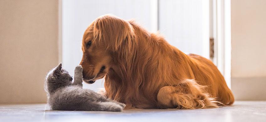 Siero Defence per Animali