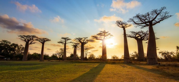 Baobab: un prezioso alleato per il tuo benessere