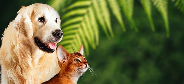 Alimenti biologici Cani e Gatti