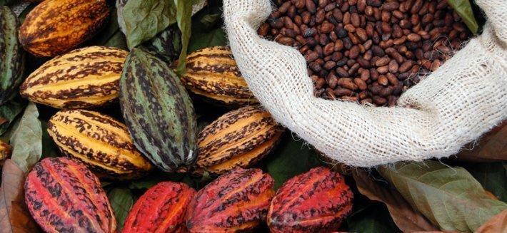 """Dalle Fave di Cacao al Cioccolato: Origine e produzione del """"cibo degli dei"""""""