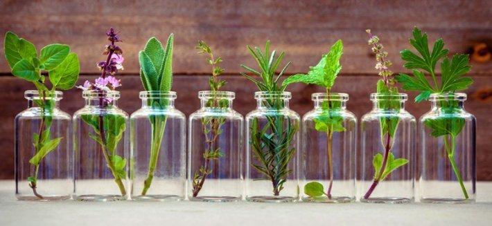 Fitodetergenza: una scelta etica per salvare la natura