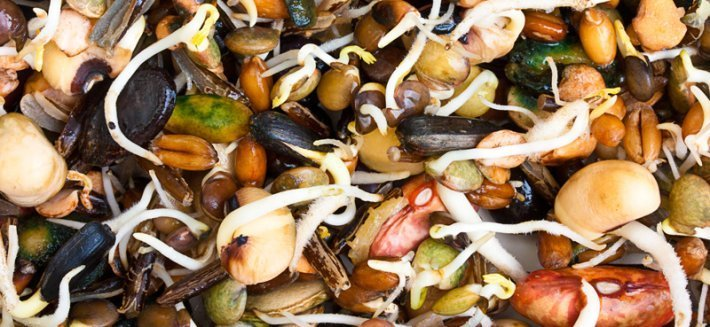 Germogli: da seme ad alimento nutriente