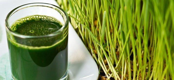 Green Magma® di Green Foods Corporation: Storia, ricerca e qualità del prodotto e dell'azienda produttrice