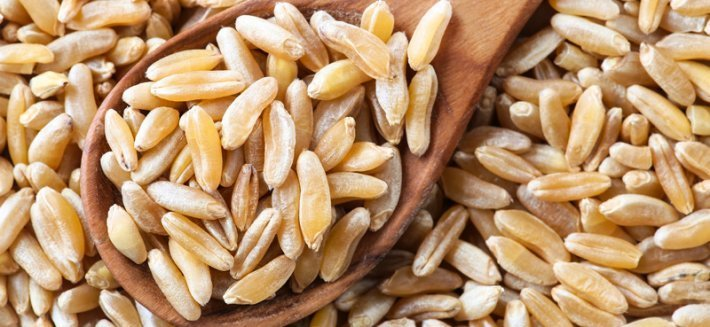 Il Kamut®: Un grano prezioso originario dell'Egitto