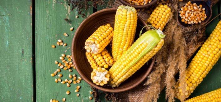 Il Mais: Un cereale versatile e prezioso